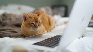 猫が動画を見ている動画画像