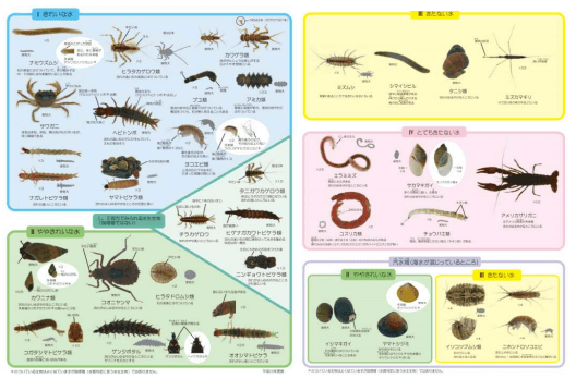 水質階級と指標生物